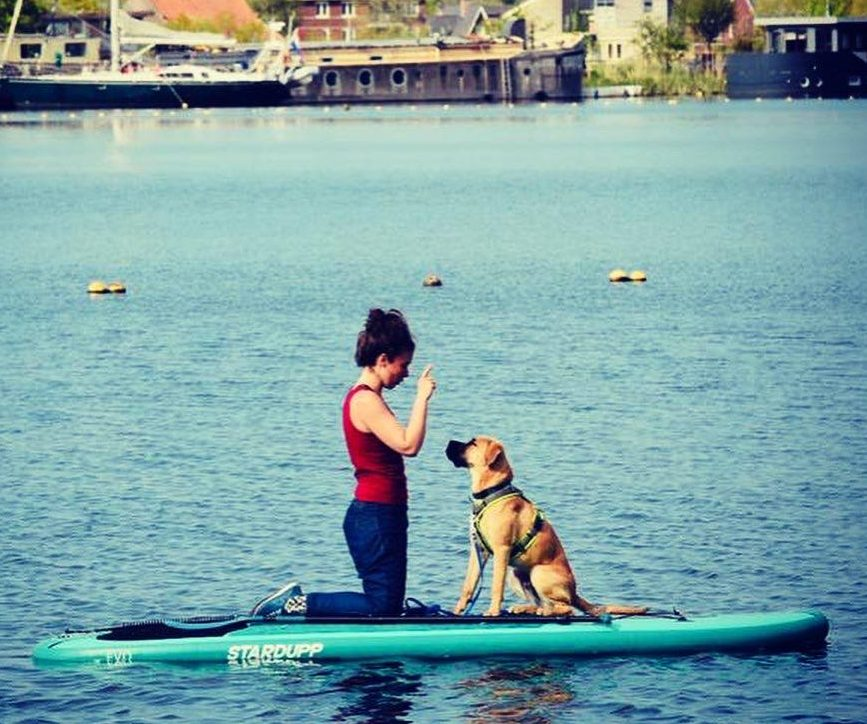 Stand up paddle dog Sunny Side Sup