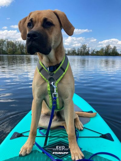 Sunny Side Sup puppy on SUP